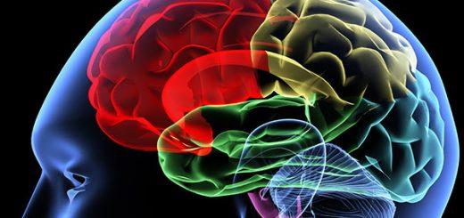 حقایق مغز انسان
